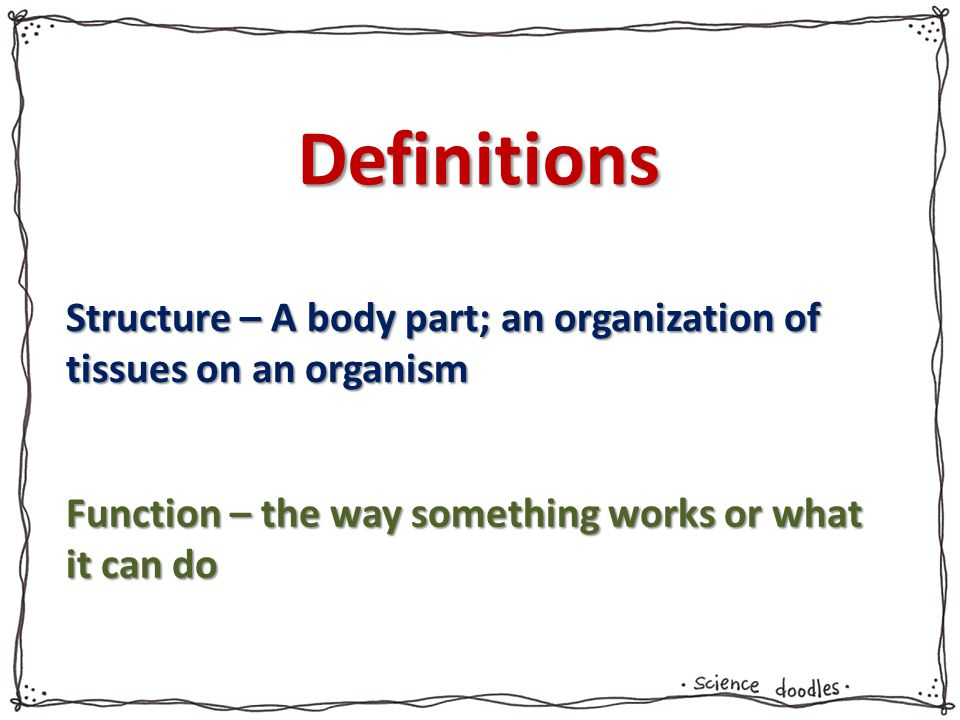 Definitions Structure – A body part; an organization of tissues on an organism.