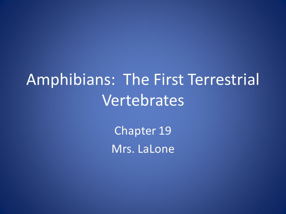 Amphibians: The First Terrestrial Vertebrates