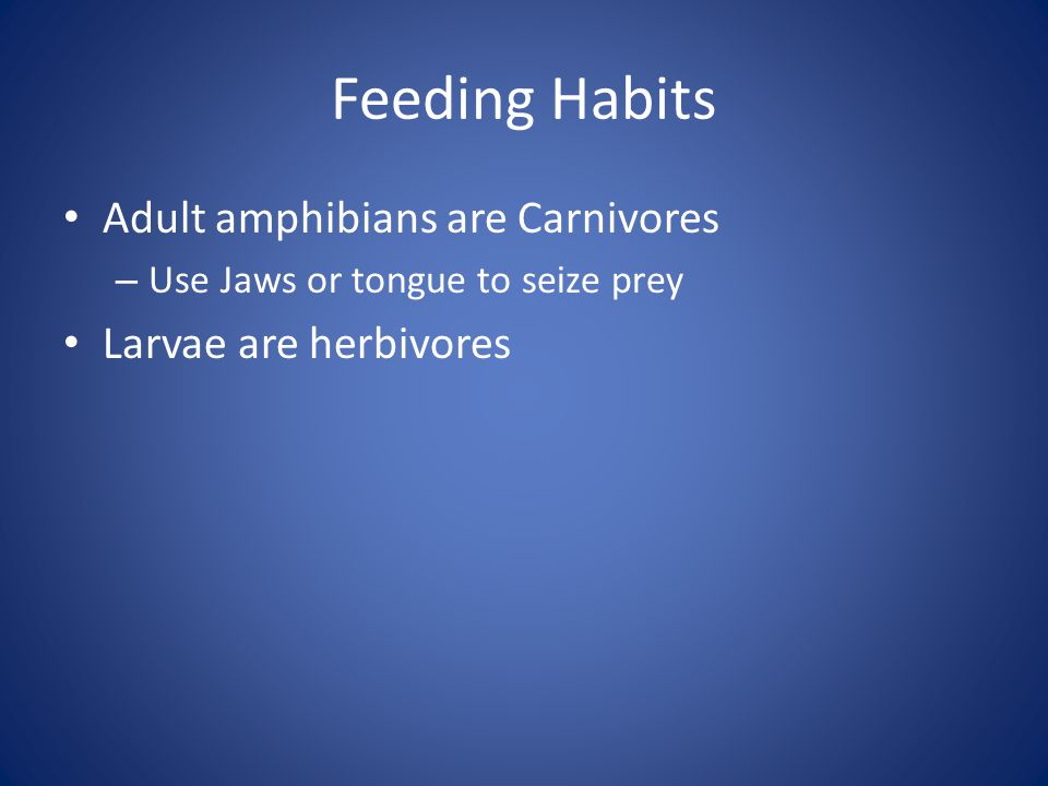 Feeding Habits Adult amphibians are Carnivores Larvae are herbivores