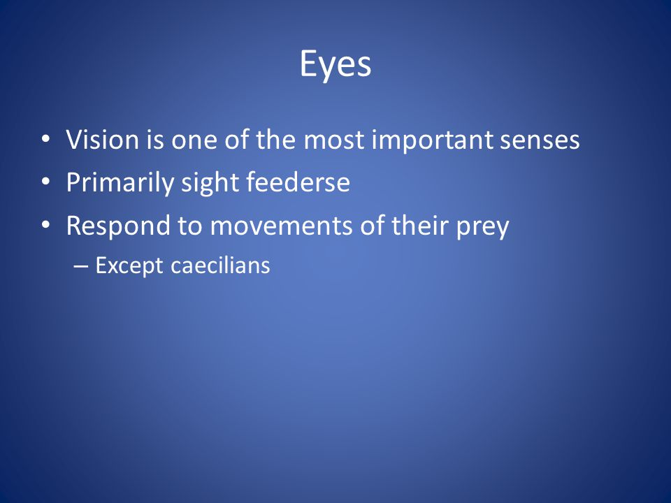 Eyes Vision is one of the most important senses