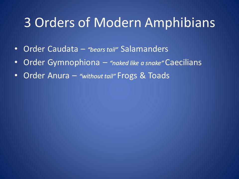 3 Orders of Modern Amphibians