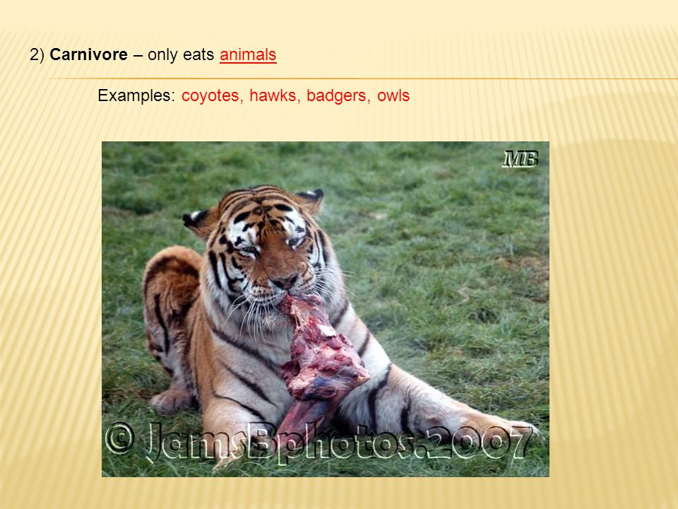2) Carnivore – only eats animals