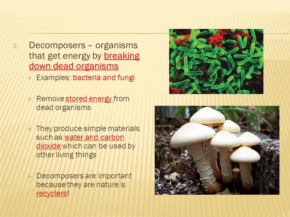 Decomposers – organisms that get energy by breaking down dead organisms