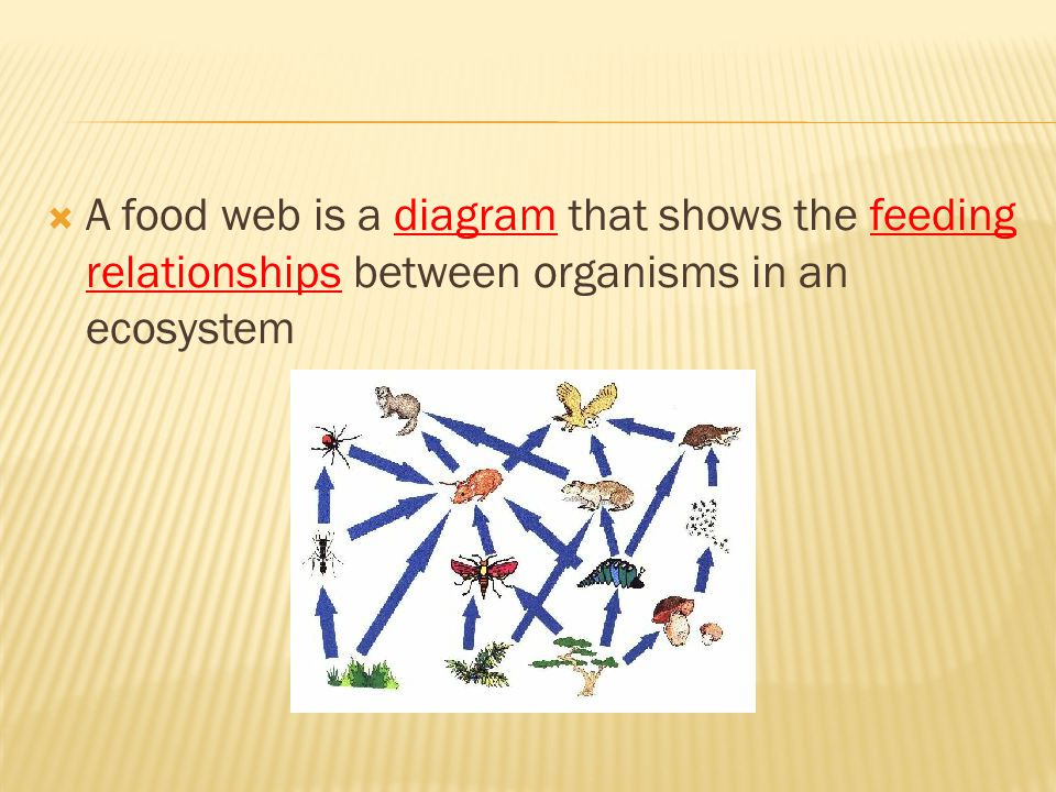 A food web is a diagram that shows the feeding relationships between organisms in an ecosystem