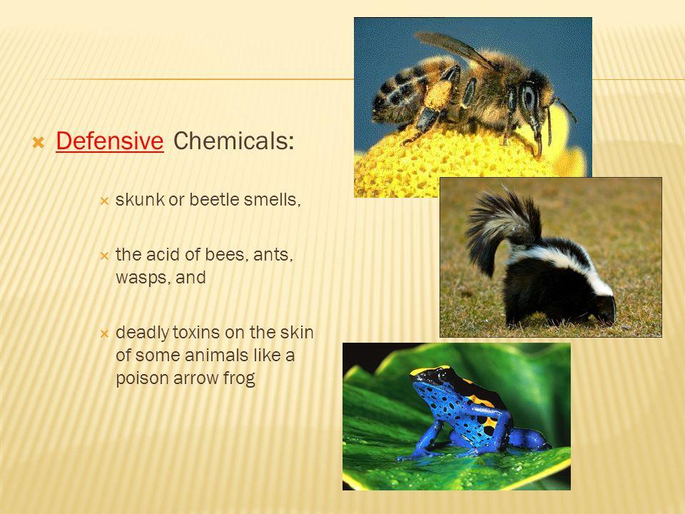 Defensive Chemicals: skunk or beetle smells,