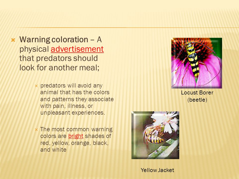 Warning coloration – A physical advertisement that predators should look for another meal;