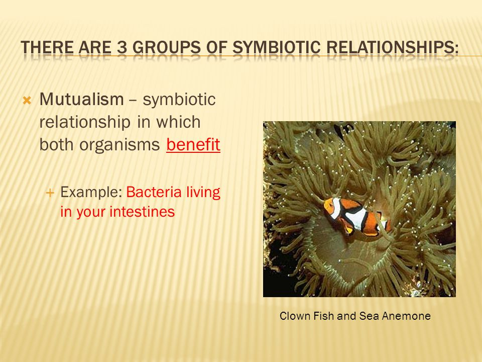 There are 3 groups of Symbiotic Relationships:
