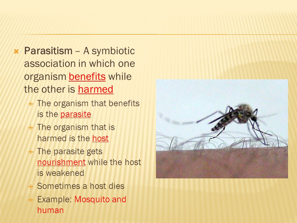Parasitism – A symbiotic association in which one organism benefits while the other is harmed