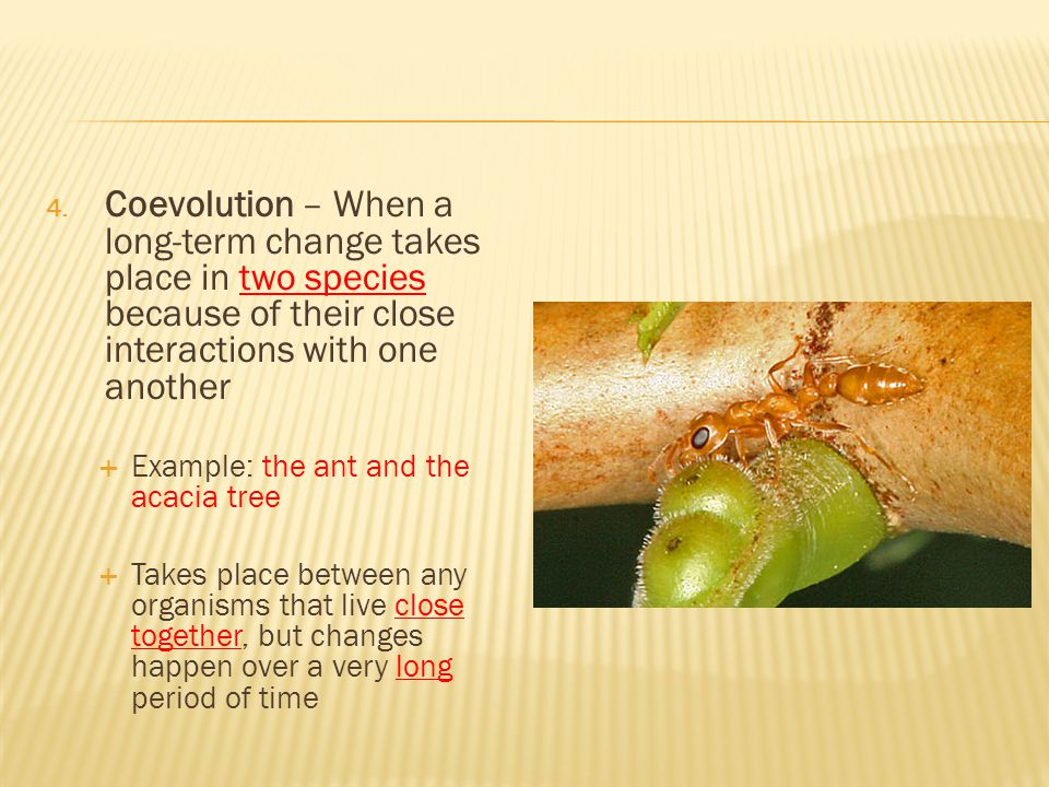 Coevolution – When a long-term change takes place in two species because of their close interactions with one another