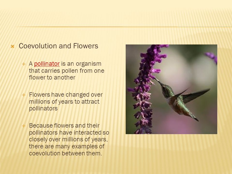 Coevolution and Flowers