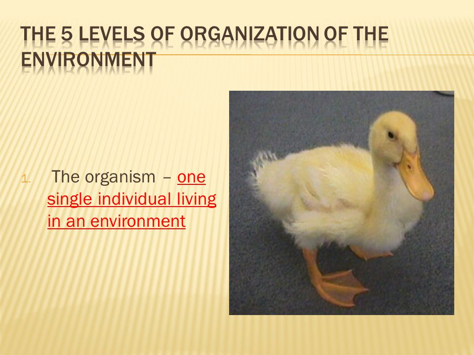 The 5 Levels of Organization of the Environment