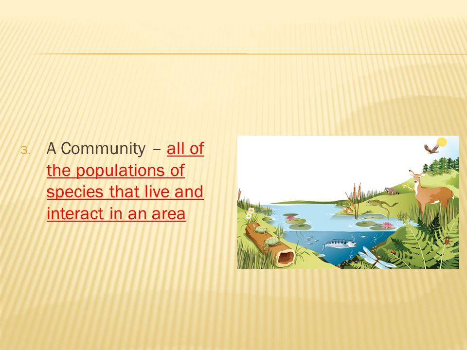A Community – all of the populations of species that live and interact in an area