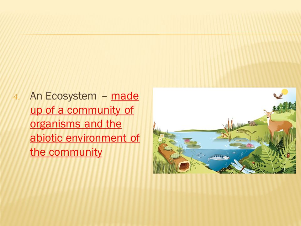 An Ecosystem – made up of a community of organisms and the abiotic environment of the community