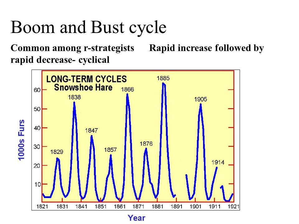 Boom and Bust cycle Common among r-strategists Rapid increase followed by rapid decrease- cyclical.