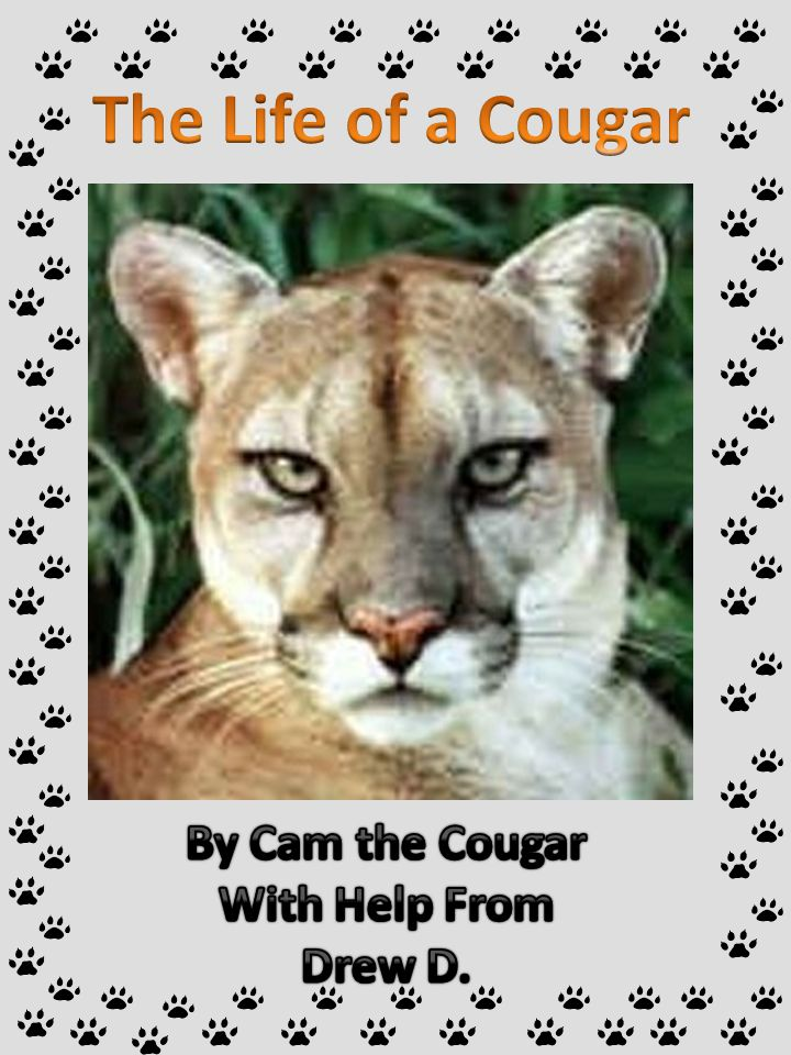 The Life of a Cougar By Cam the Cougar With Help From Drew D.