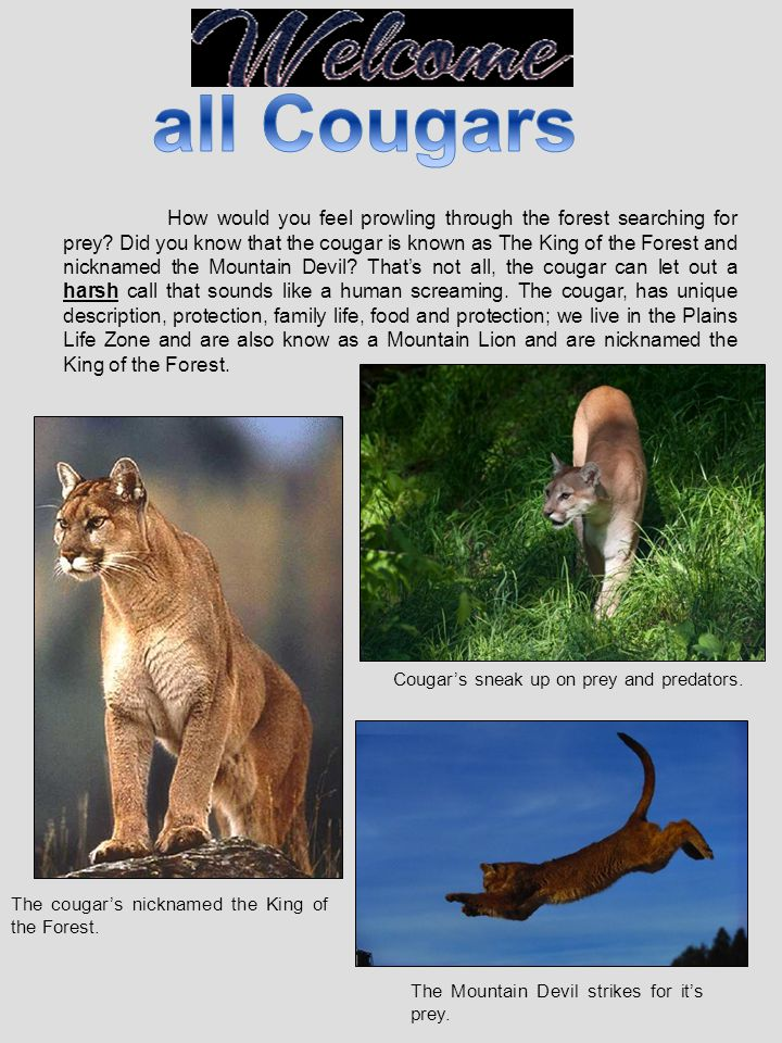 all Cougars