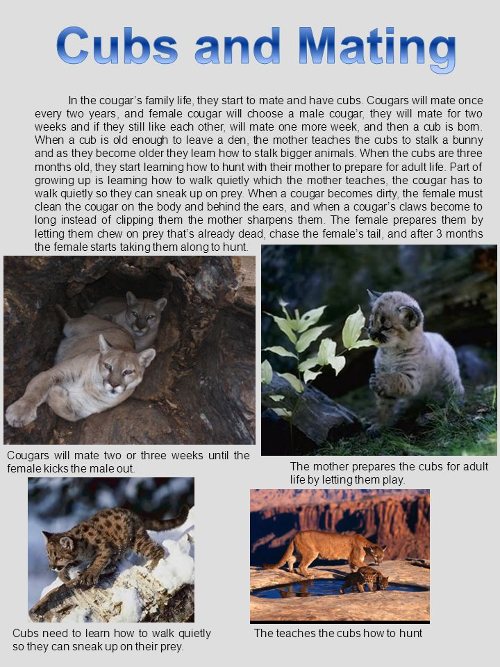 Cubs and Mating