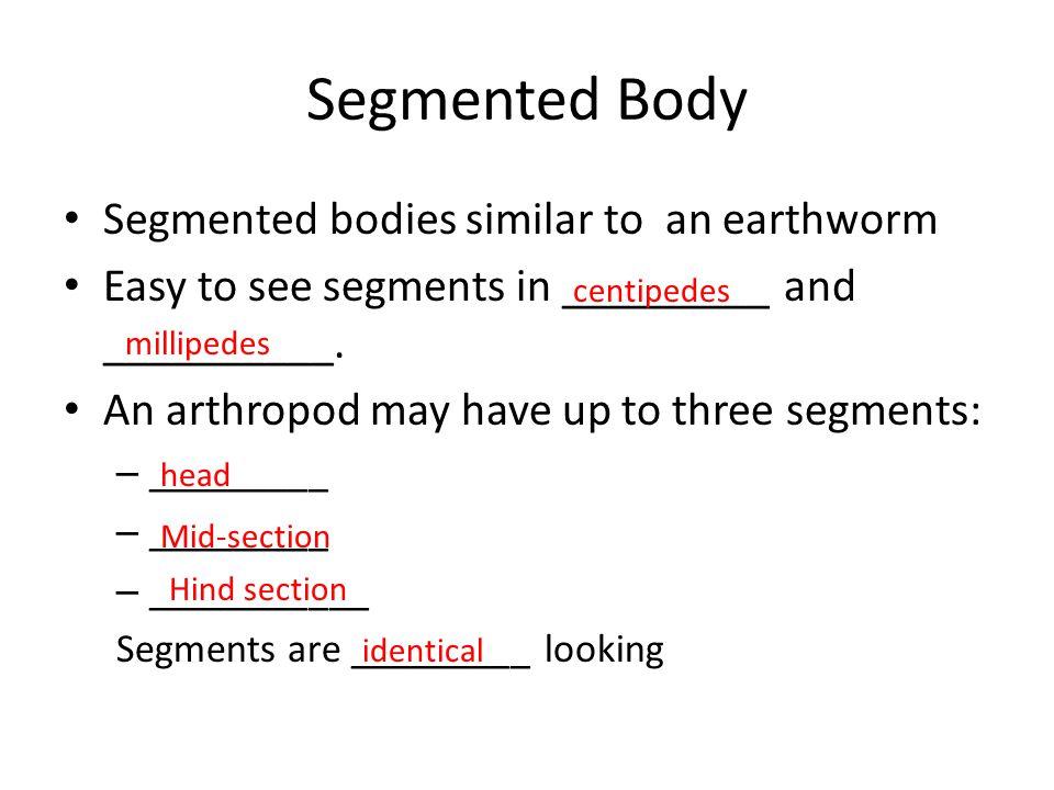 Segmented Body Segmented bodies similar to an earthworm
