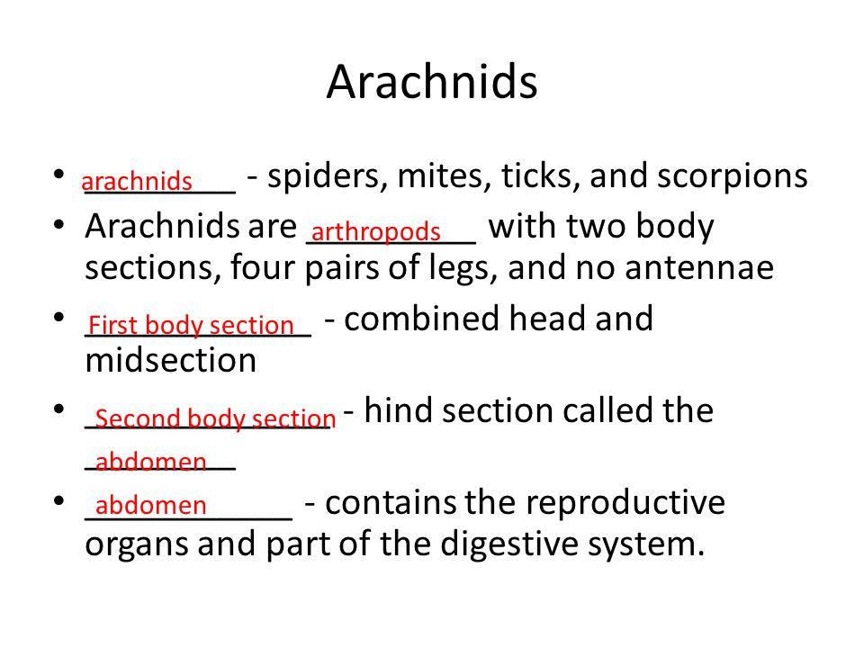 Arachnids ________ - spiders, mites, ticks, and scorpions