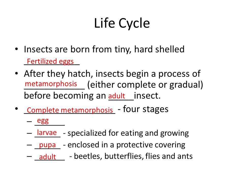 Life Cycle Insects are born from tiny, hard shelled ___________