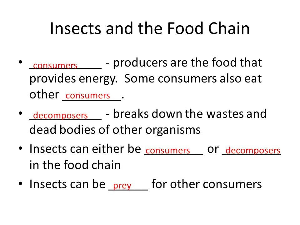 Insects and the Food Chain