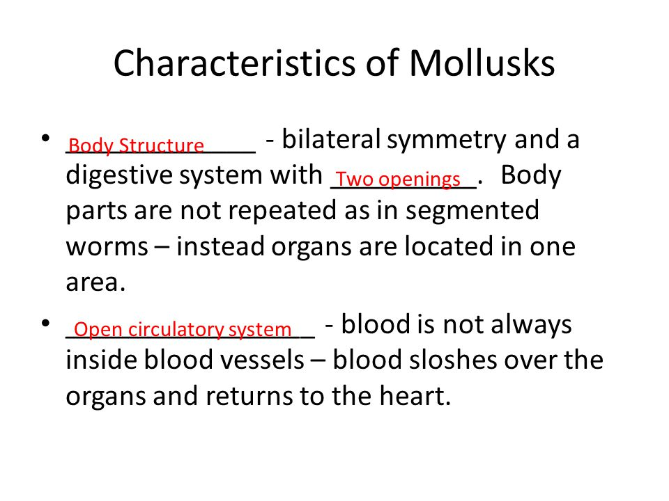Characteristics of Mollusks