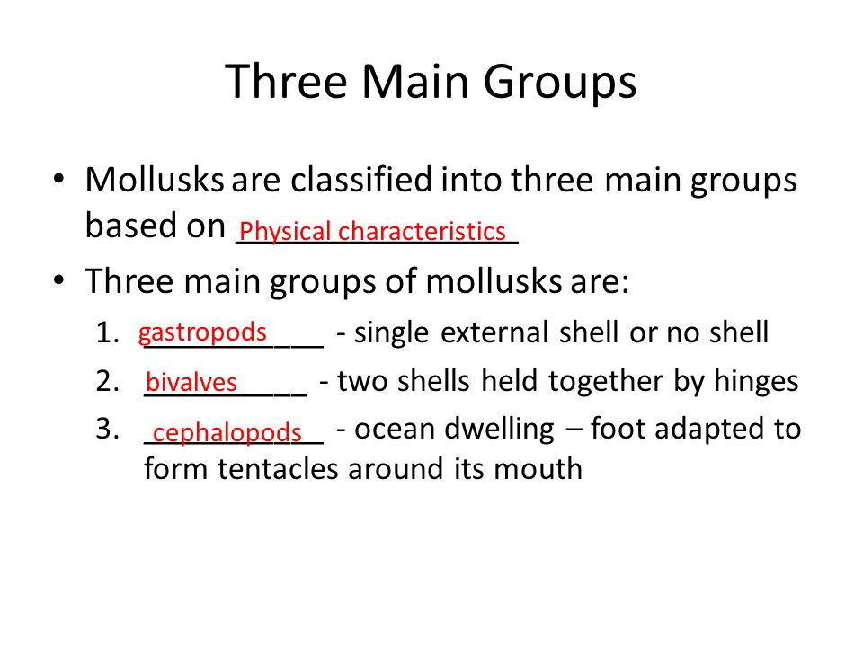 Three Main Groups Mollusks are classified into three main groups based on _______________. Three main groups of mollusks are: