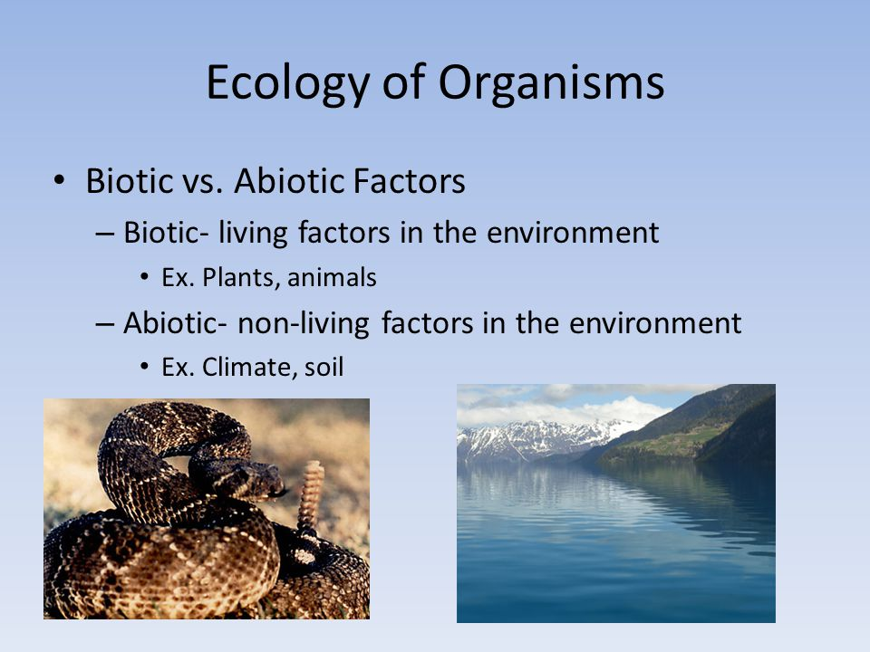Ecology of Organisms Biotic vs. Abiotic Factors
