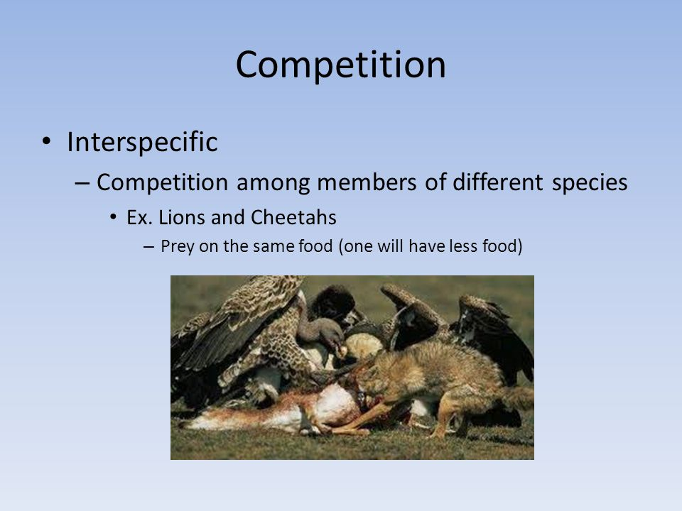 Competition Interspecific