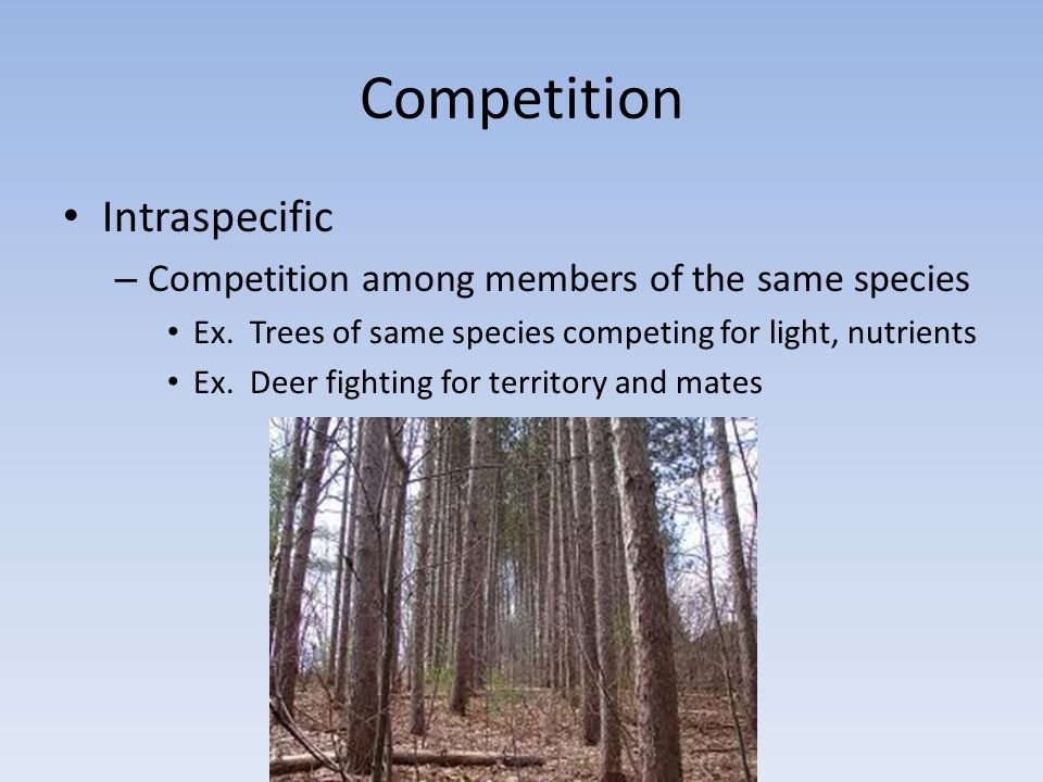 Competition Intraspecific