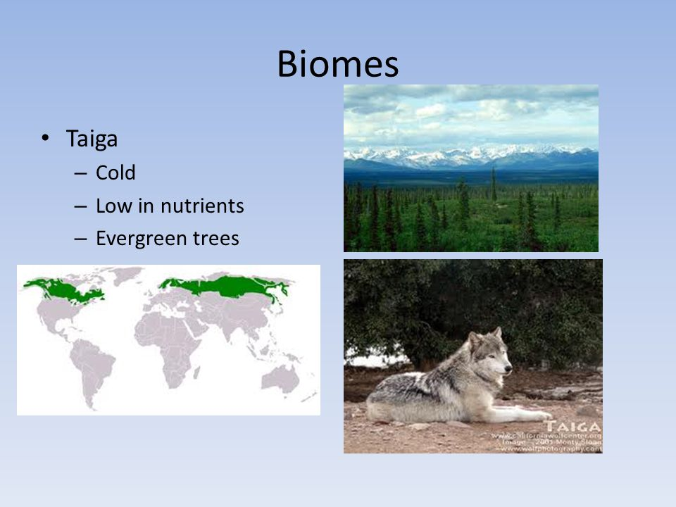 Biomes Taiga Cold Low in nutrients Evergreen trees