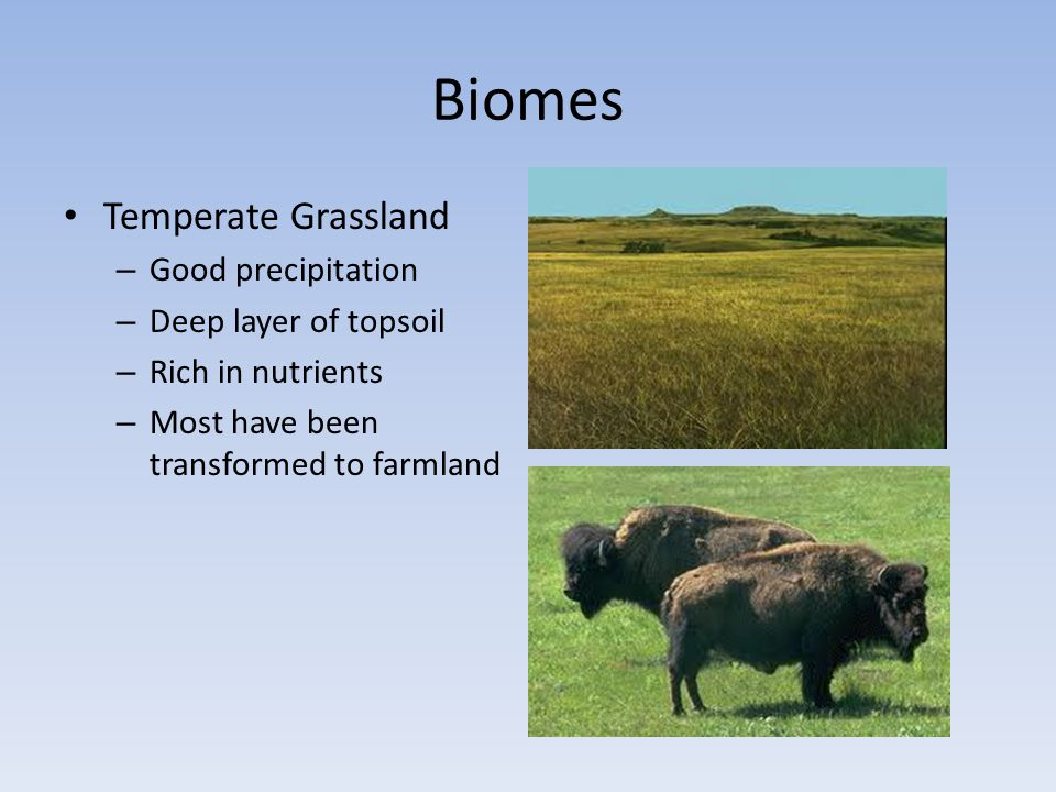 Biomes Temperate Grassland Good precipitation Deep layer of topsoil