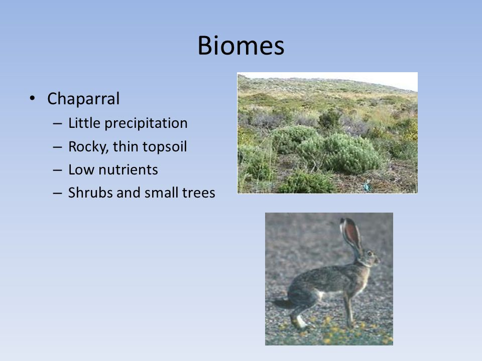Biomes Chaparral Little precipitation Rocky, thin topsoil