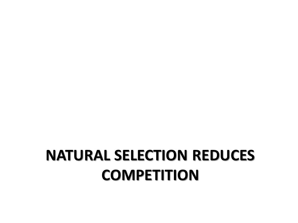 Natural selection reduces competition