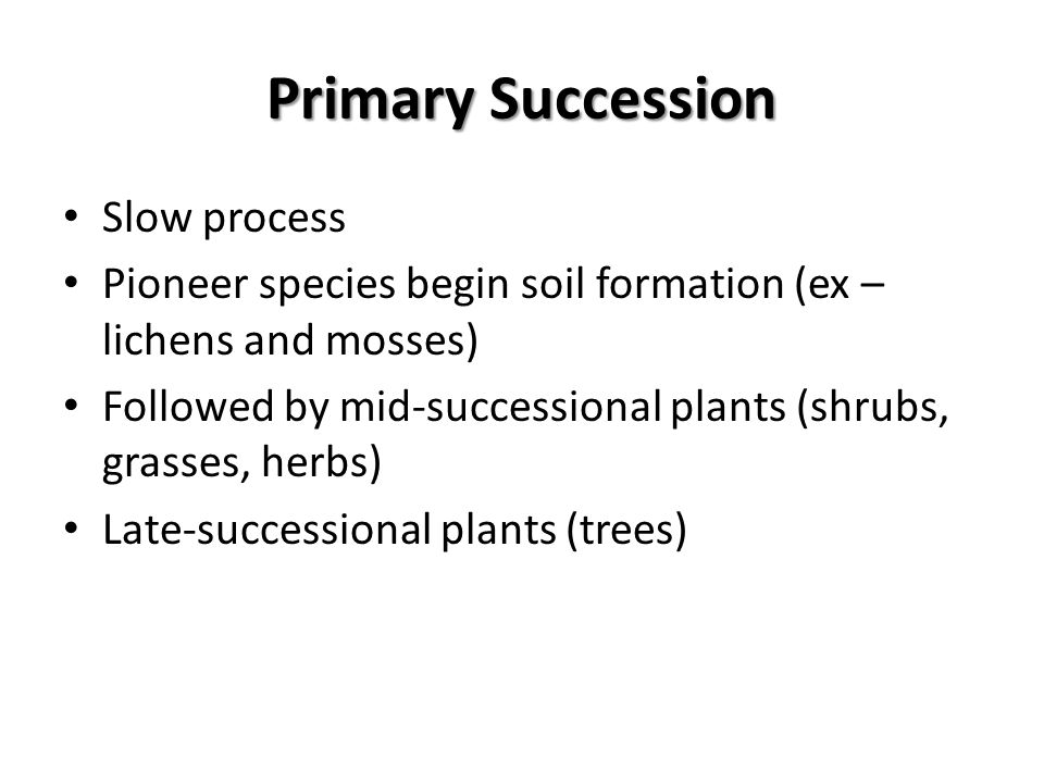 Primary Succession Slow process