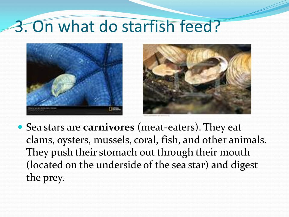 3. On what do starfish feed