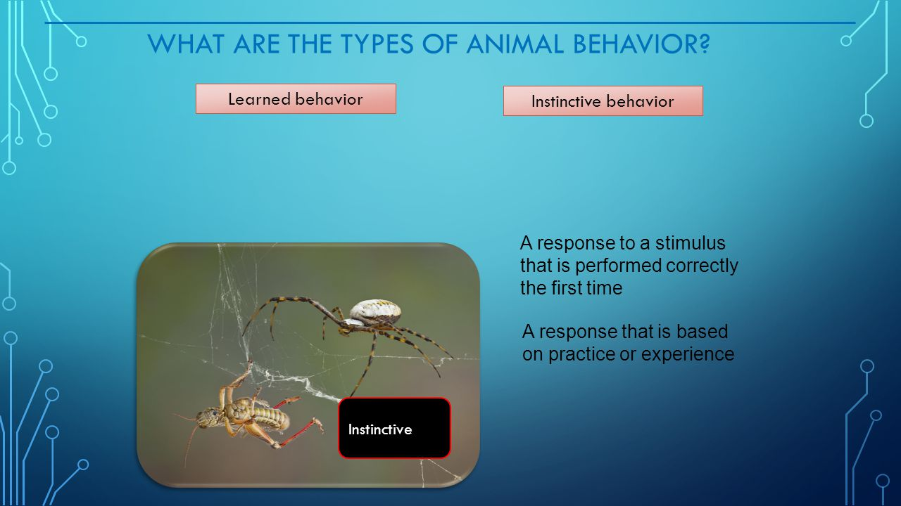 What Are the Types of Animal Behavior