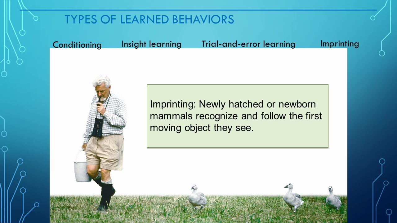 Types of Learned Behaviors