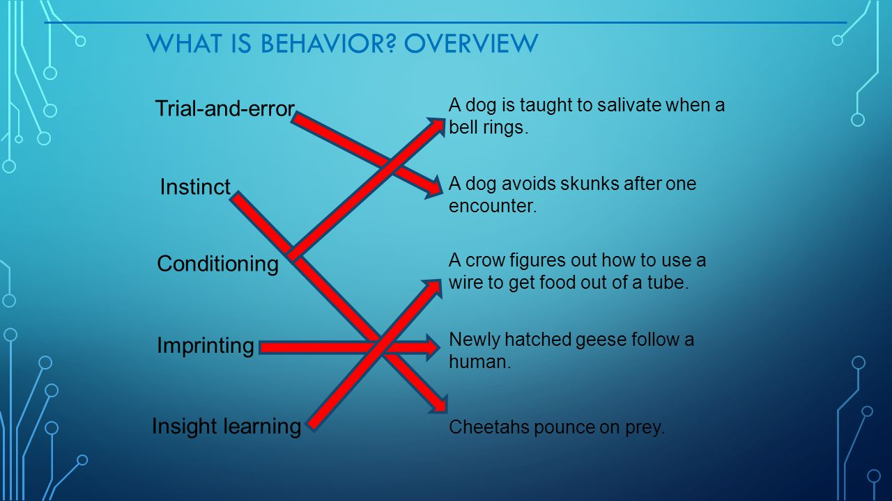 What Is Behavior Overview