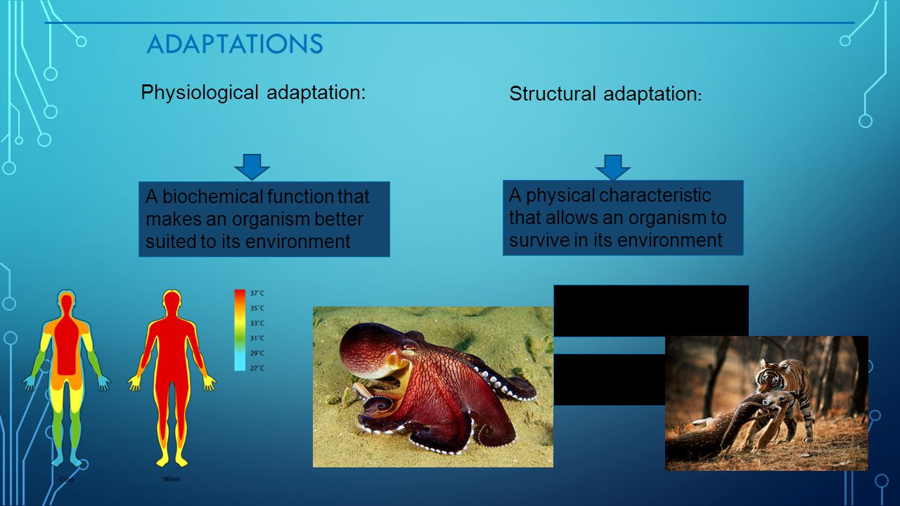 Adaptations Physiological adaptation: Structural adaptation:
