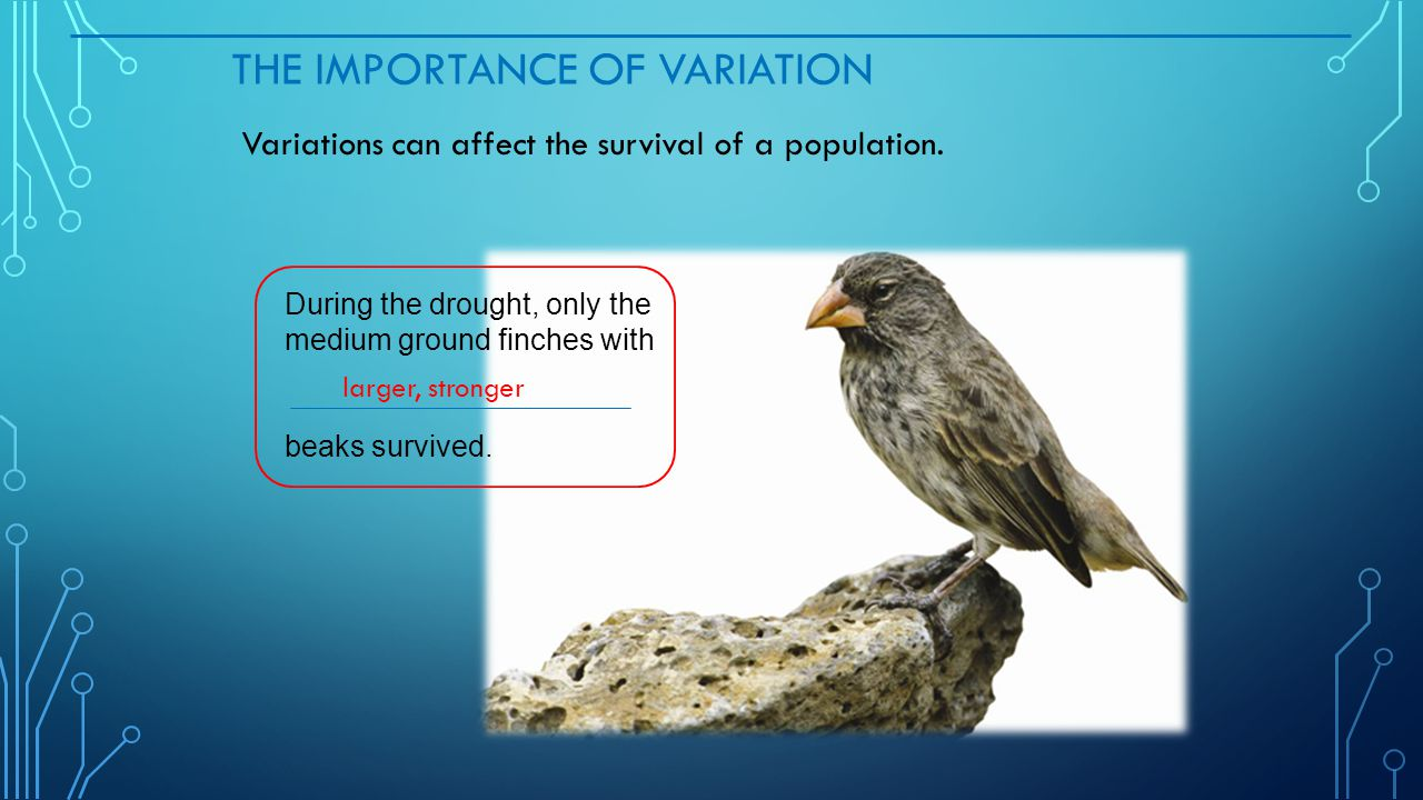 The Importance of Variation