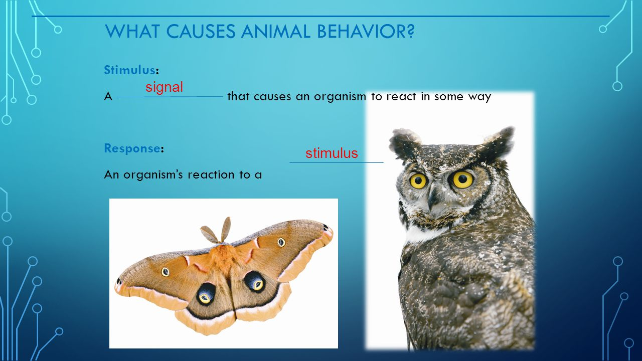 What Causes Animal Behavior