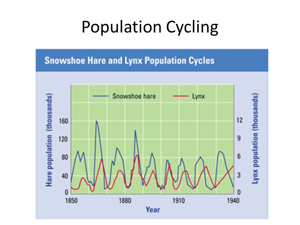 Population Cycling