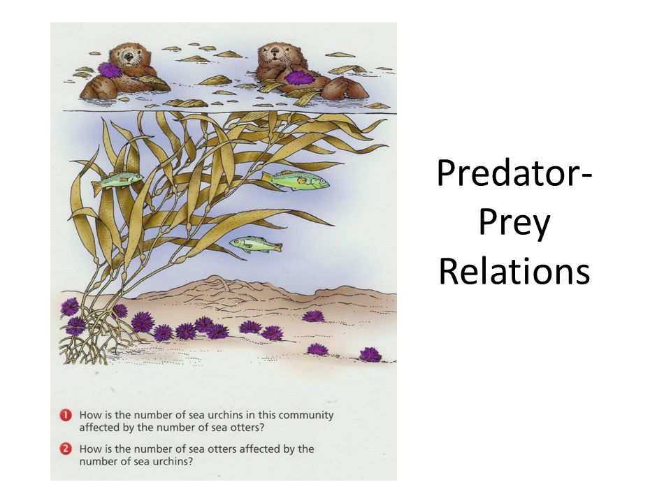 Predator-Prey Relations
