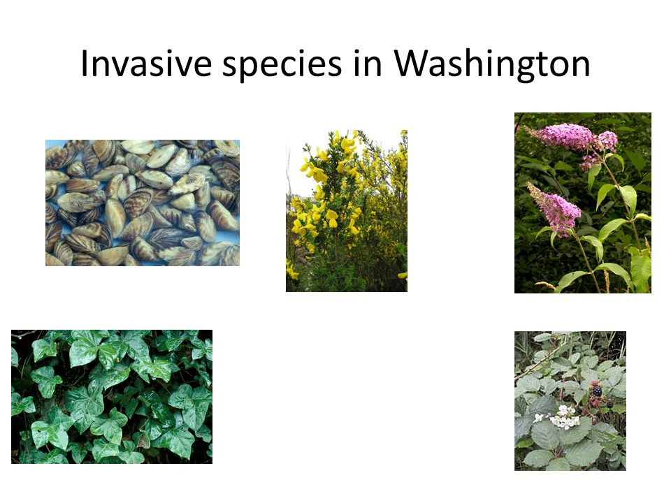 Invasive species in Washington