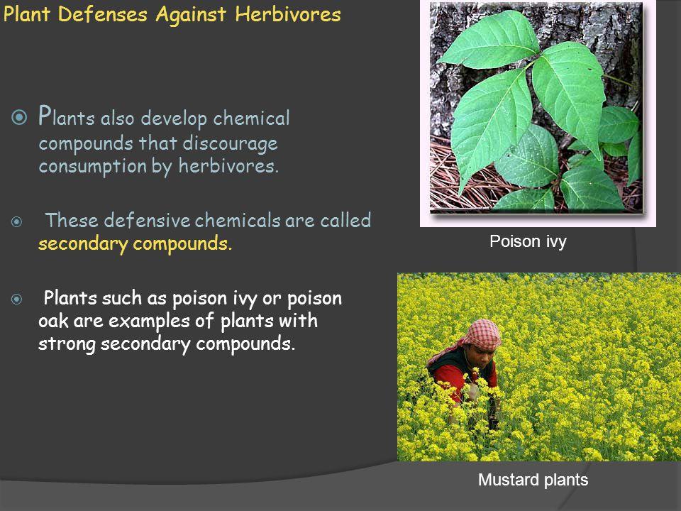 Plant Defenses Against Herbivores