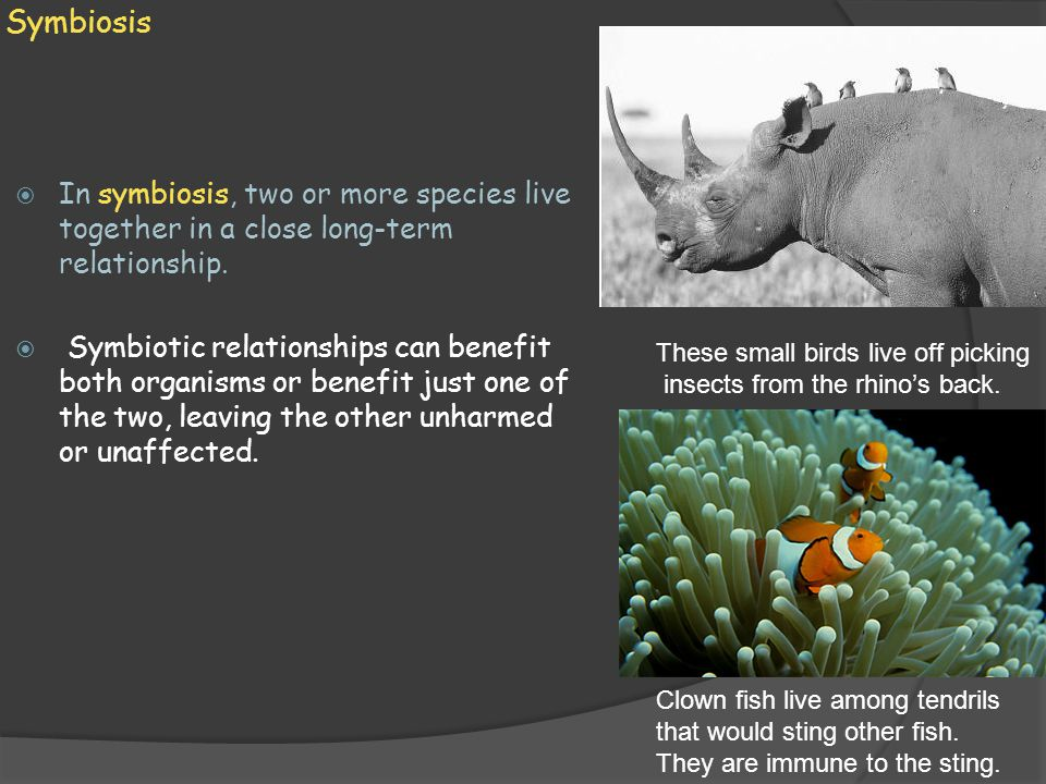 Symbiosis In symbiosis, two or more species live together in a close long-term relationship.