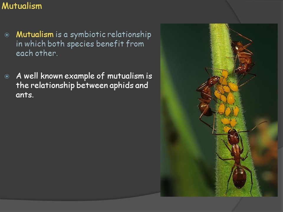 Mutualism Mutualism is a symbiotic relationship in which both species benefit from each other.