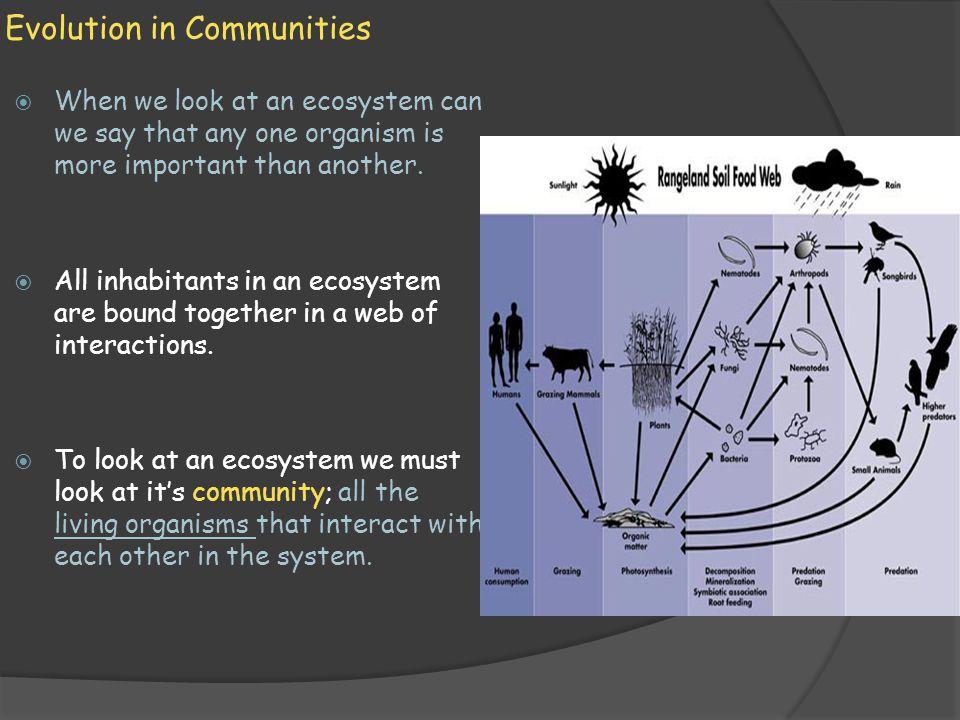 Evolution in Communities