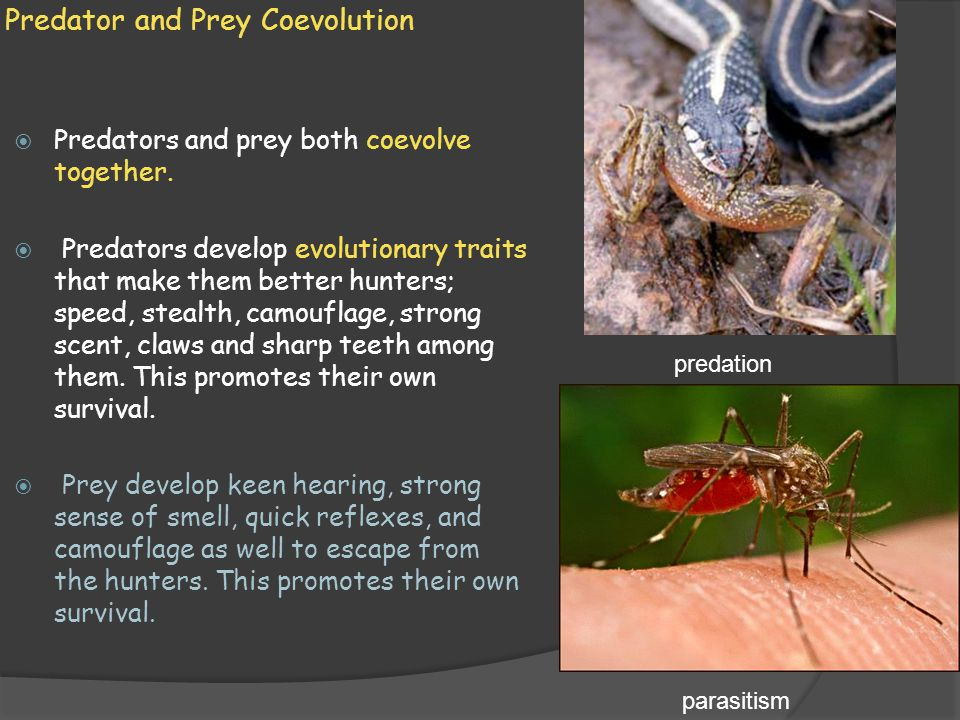 Predator and Prey Coevolution